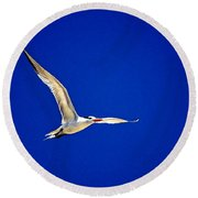 Royal Tern 2 Round Beach Towel by Ludwig Keck