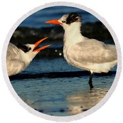 Royal Tern Courtship Dance Round Beach Towel