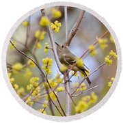 Round Beach Towel featuring the photograph Ruby-crowned Kinglet by Kerri Farley