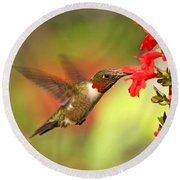 Ruby Throat Hummingbird Photo Round Beach Towel