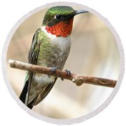 Ruby Throated Hummingbird Round Beach Towel