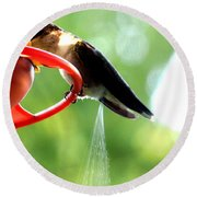 Ruby-throated Hummingbird Pooping Round Beach Towel