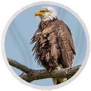 Ruffled Feathers Bald Eagle Round Beach Towel
