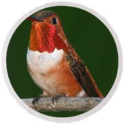 Rufous Hummingbird Round Beach Towel