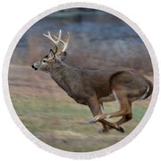 Running Buck Round Beach Towel by Amy Porter