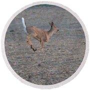 Running White-tailed Deer Round Beach Towel