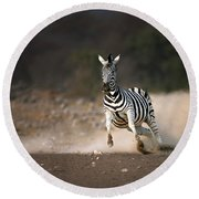 Running Zebra Round Beach Towel