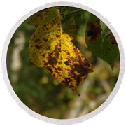 Round Beach Towel featuring the photograph Rusty Leaf by Nick Kirby