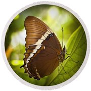 Round Beach Towel featuring the photograph Rusty Tip Butterfly by Bradley R Youngberg