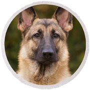 Sable German Shepherd Dog Round Beach Towel by Sandy Keeton