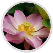 Sacred Lotus Round Beach Towel
