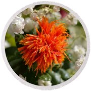 Safflower Amongst The Gypsophilia Round Beach Towel