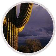 Saguaro Cactus Sunset At Dusk Arizona State Usa Round Beach Towel