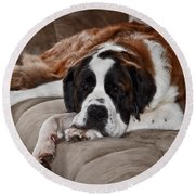 Saint Bernard Round Beach Towel
