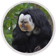 Saki Monkey Round Beach Towel
