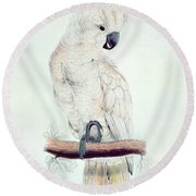 Salmon Crested Cockatoo Round Beach Towel by Edward Lear