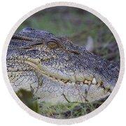 Saltwater Crocodile Round Beach Towel by Venetia Featherstone-Witty