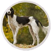 Saluki Round Beach Towel
