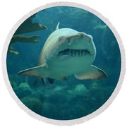 Round Beach Towel featuring the photograph Sand Shark by Robert Meanor