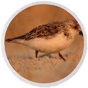 Sanderling Sunrise Round Beach Towel