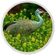 Sandhill Crane Round Beach Towel by Elizabeth Winter