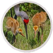 Sandhill Crane Family Feeding Round Beach Towel