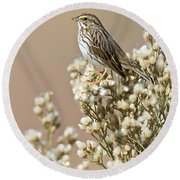 Round Beach Towel featuring the photograph Savannah Sparrow by Bryan Keil