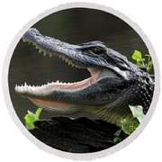 Say Aah - American Alligator Round Beach Towel
