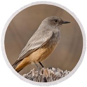 Say's Phoebe On A Fence Post Round Beach Towel