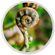 Round Beach Towel featuring the photograph Scaly Male Fern Frond by Fabrizio Troiani