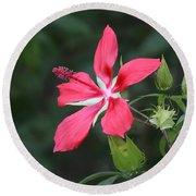 Scarlet Hibiscus #3 Round Beach Towel