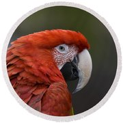 Round Beach Towel featuring the photograph Scarlet Macaw by David Millenheft