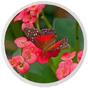 Scarlet Swallowtail Butterfly On Crown Of Thorns Flowers Round Beach Towel