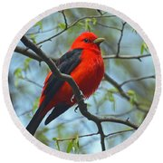 Scarlet Tanager In The Forest Round Beach Towel