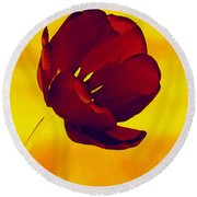 Scarlet Tulip At Sunset Round Beach Towel