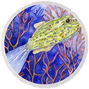 Scrawled Filefish Round Beach Towel