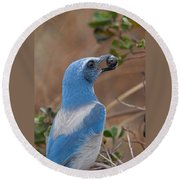 Round Beach Towel featuring the photograph Scrub Jay With Acorn by Paul Rebmann