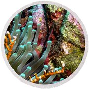 Round Beach Towel featuring the photograph Sea Anemone And Coral Rainbow Wall by Amy McDaniel