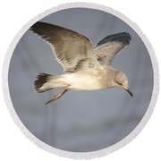Sea Bird Round Beach Towel