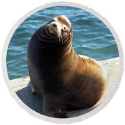 Round Beach Towel featuring the photograph Sea Lion Basking In The Sun by Chalet Roome-Rigdon