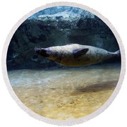 Round Beach Towel featuring the photograph Sea Lion Swimming Upsidedown by Verana Stark