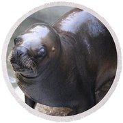 Sea Lion Round Beach Towel by Venetia Featherstone-Witty