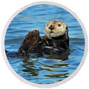 Round Beach Towel featuring the photograph Sea Otter Primping by Susan Wiedmann