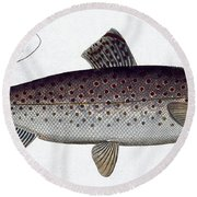 Sea Trout Round Beach Towel