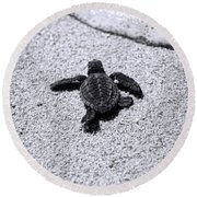 Sea Turtle Round Beach Towel by Sebastian Musial