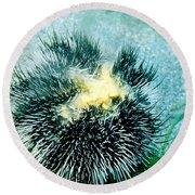 Sea Urchin Releasing Eggs Round Beach Towel