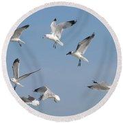Seagulls See A Cracker Round Beach Towel