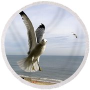 Inquisitive Seagull Round Beach Towel