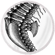 Seahorse Round Beach Towel by Unknown