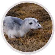 Seal Pup Round Beach Towel by DejaVu Designs
